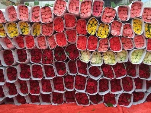 red rose 130