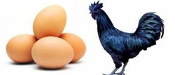 Kadaknath Breed Eggs, For Household