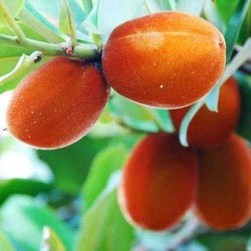 Er Fruit Plant