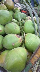A1 Number Green Coconut
