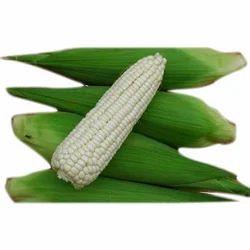 White Waxy Corn
