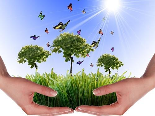 Environmental Impact Assessment Service