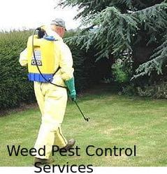 Weed Pest Control Services