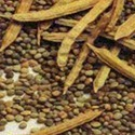 Guvar Seed