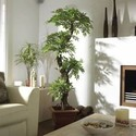 Well Watered Aloe Barbadensis Mill Indoor Plants