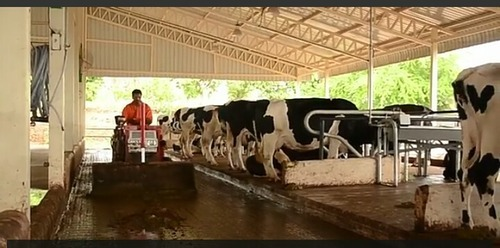 Steel Moderate Cow Farm Shed Rs 270 Square Feet Sri Ram Engineering Id 11488848812
