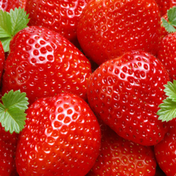 Strawberry - Wholesale Price for Strawberry in India
