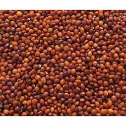 Indian Organic Red Gram Seeds, No Preservatives