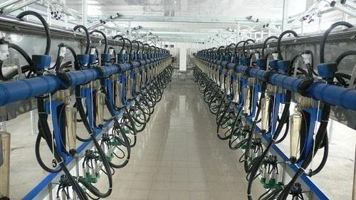 Herringbone Milking Parlour, Capacity: 50-200 Cows, Rs 450000 /piece | ID:  13200986188