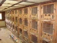 Aviary Designs Indoor Bird Aviary Wholesale Supplier From Coimbatore