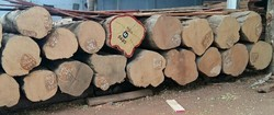 Burma Teak Round Logs