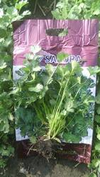 Coriander Seeds, Packaging: Packet