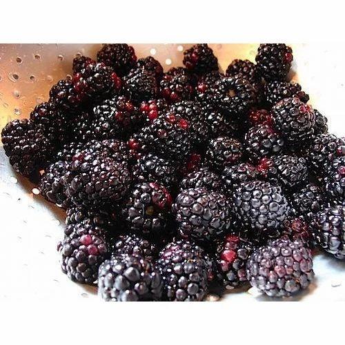 Fresh Blackberry, ब्लैकबेरी फ्रूट