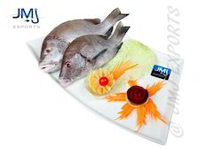 Blubber Lip Snapper Fish