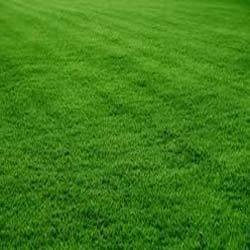 Artificial Grass Carpet Nakli Ghas Ke Kaleen Suppliers