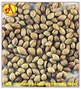 Coriander Seed Pure Essential Oil
