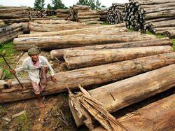 Myanmar Teak Wood Logs