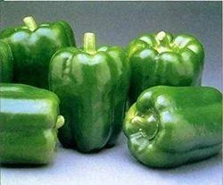 Green Capsicum, Packaging Size: 10kg, Packaging: Plastic Bag or Polythene