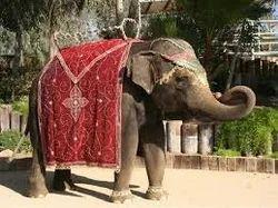 Bride Elephant Rental Service