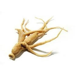 Ginseng Roots at Best Price in India