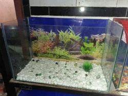 Sea Fish Aquarium