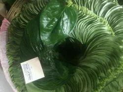 Garden Bangla Paan Betel Leaf