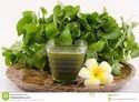 Centella Asiatica Herb