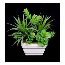 Succulent Plant (SPG-02) Artificial