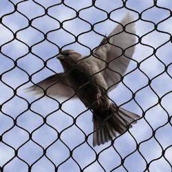 Pigeon Nets
