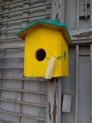 Bird House in Lucknow, बर्ड हाउस, लखनऊ, Uttar