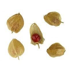 Herbal Seeds
