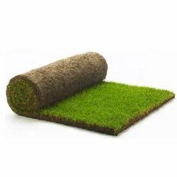 Natural Grass Carpet