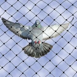 Bird Netting Service