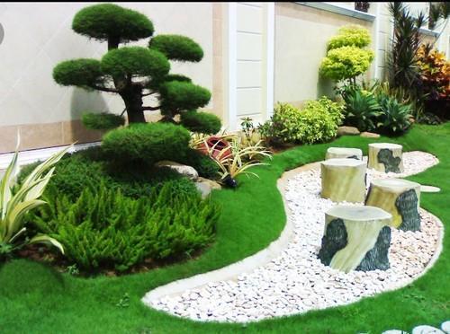 Cashew Grafted Plants Landscape Gardening Service Wholesaler