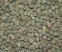 Chickpeas (Green) Testing Services