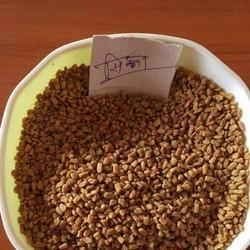 Sortex Clean Fenugreek Seed Sicca Marking