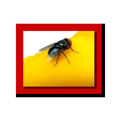 Fly Management Service