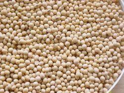 Dried Soybean