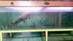 Fish Aquarium Wholesaler & Wholesale Dealers in India