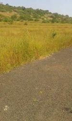 Solgao Barsu MIDC Land Sale, Size/ Area: 60 Acre