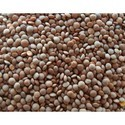 Brown Vishal Research Seeds Farm Linnton Seeds, Packaging Size: 20 Kg