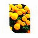 Orange Mari Gold Flower Seeds