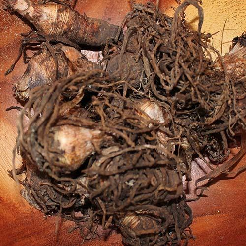 African Roots Quotes: Dioscorea Root Manufacturer From Jammu