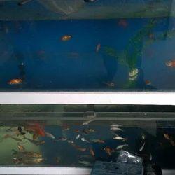 Designer Fish Aquarium