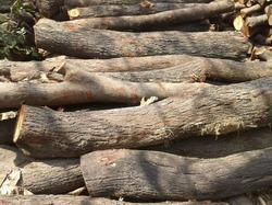 Babool Wood Log
