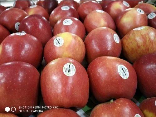Bkm Fruits - Wholesaler of Clee Apple & Washington Apples from Bengaluru