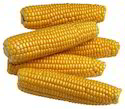Indian Yellow Maize, Organic