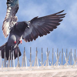 Large Bird Spike