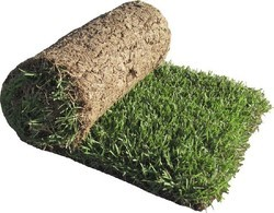 Neelgiri Grass Carpet Natural