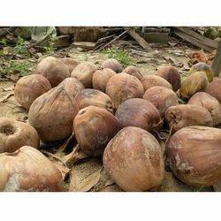 A Grade Solid Fresh Husked Mature Coconut, Karnataka